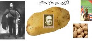 سیب زمینی - آلوی سرجان ملکم