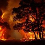 افزایش 50 درصدی آتشسوزی جنگلها