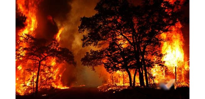 افزایش ۵۰ درصدی آتشسوزی جنگلها + پی نوشت جامعه اسلامی حامیان کشاورزی ایران