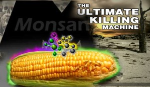 The-Ultimate-Killing-Machine-GMOs