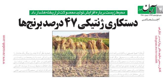 دستکاری ژنتیکی ۴۷ درصد برنجها