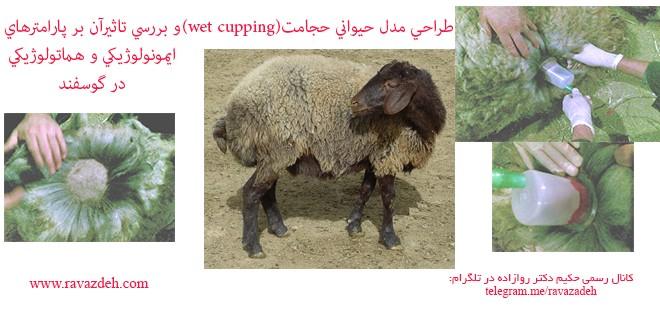 طراحی مدل حیوانی حجامت (wet cupping) و بررسی تاثیرآن بر پارامترهای ایمونولوژیکی و هماتولوژیکی در گوسفند