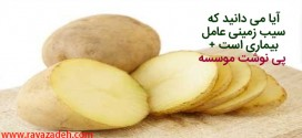 آیا می دانید که سیب زمینی عامل بیماری است + پی نوشت موسسه