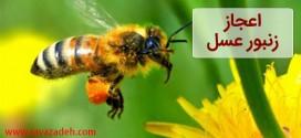 اعجاز زنبور عسل