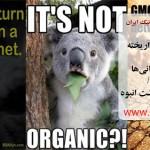 عضو هیأت رئیسه انجمن ارگانیک ایران: تولید محصولات تراریخته تعلیق شود