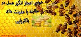 خواص اعجاز انگیز عسل در مقابله با عفونت های باکتریایی