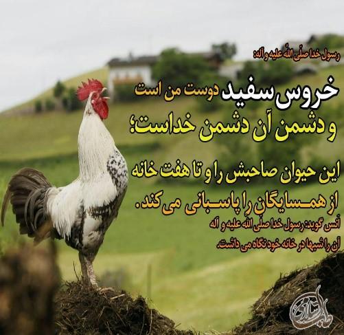 image result for ای وس سحری