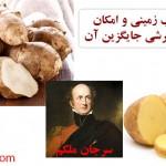 منع مصرف سیب زمینی و امکان استفاده از سیب ترشی جایگزین آن