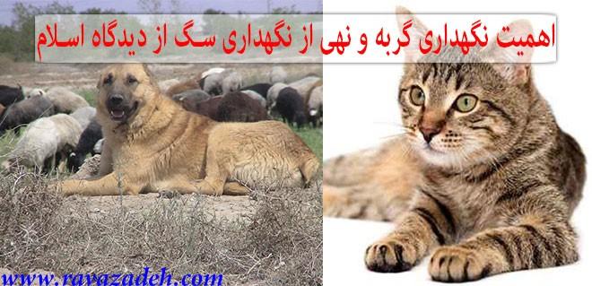 اهمیت نگهداری گربه و نهی از نگهداری سگ از دیدگاه اسلام