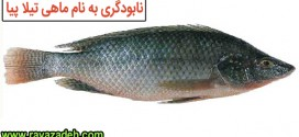 نابودگری به نام ماهی تیلا پیا
