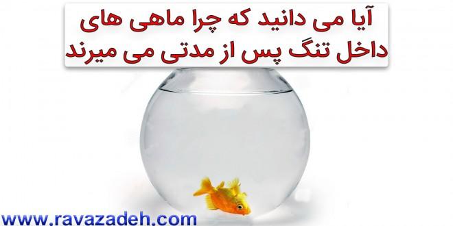 آیا می دانید که چرا ماهی های داخل تنگ پس از مدتی می میرند