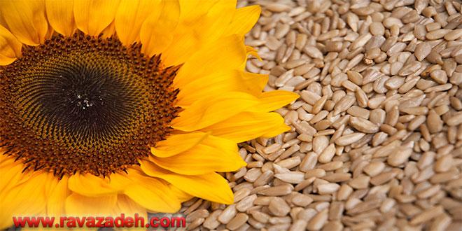 دانههای آفتابگردان آلوده عامل ابتلا به سرطان کبد