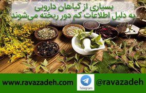 گیاه دارویی