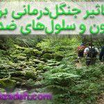 جنگل درمانی