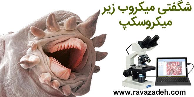 شگفتی میکروب زیر میکروسکپ