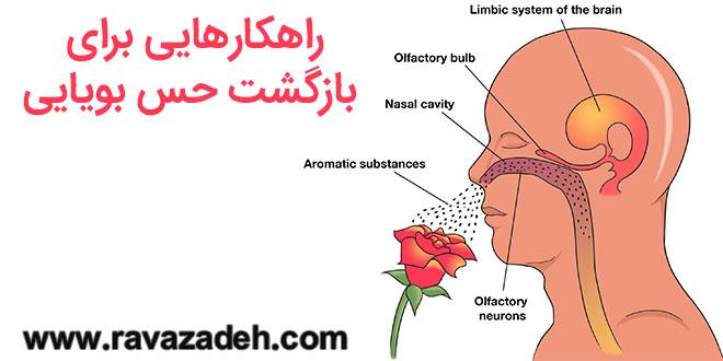 راهکارهایی برای بازگشت حس بویایی