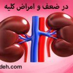 در ضعف و امراض کلیه