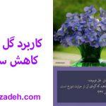 کاربرد گل بنفشه در کاهش سوزش تب