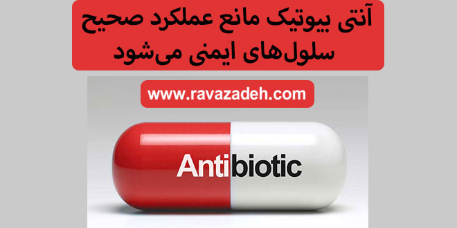 آنتی بیوتیک مانع عملکرد صحیح سلولهای ایمنی میشود