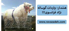 هشدار: واردات گوساله نژاد فرانسوی!!!