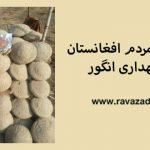 روش سنتی مردم افغانستان برای نگهداری انگور