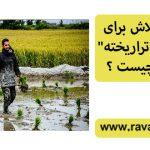 """پشتپرده تلاش برای کشت """"برنج تراریخته"""" در ایران چیست؟"""