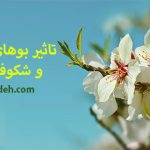 تاثیر بوهای خوش گلها و شکوفههای بهار