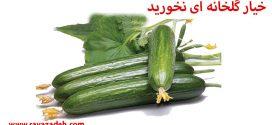 خیار گلخانه ای نخورید