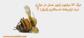 مرگ ۳۷ میلیون زنبور عسل در مزارع ذرت تراریخته (دستکاری ژنتیکی) ‼