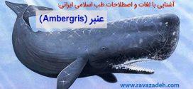 آشنایی با لغات و اصطلاحات طب اسلامی ایرانی: عنبر (Ambergris)