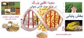 سویا؛ تقلبی بزرگ در تولید مواد غذایی جهانی – بخش پنجم (پایانی)