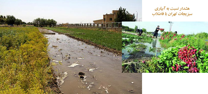 Photo of هشدار نسبت به آبیاری سبزیجات تهران با فاضلاب/لاپوشانیهای سلامت زیاد است