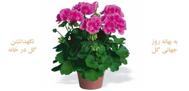 نگهداشتن گل در خانه