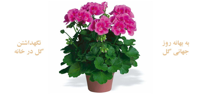 Photo of نگهداشتن گل در خانه