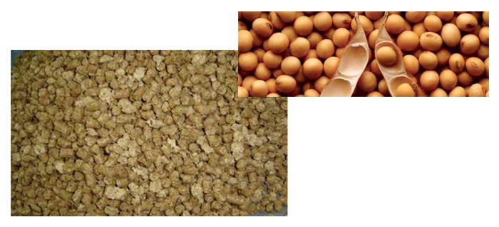 Photo of طبع سویا و منع مصرف تفاله سویا