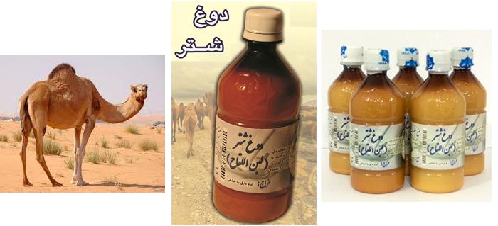 Photo of معرفی محصولات و داروها: دوغ شتر (لبن اللقاح)