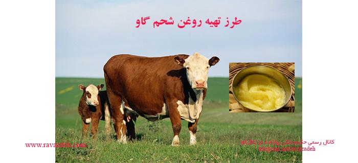 Photo of طرز تهیه روغن شحم گاو