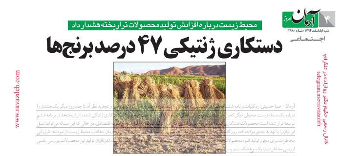 Photo of دستکاری ژنتیکی 47 درصد برنجها