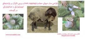 طراحی مدل حجامت بر روی حیوانات (wet cupping) و بررسی تاثیرآن بر پارامترهای ایمونولوژیکی و هماتولوژیکی در گوسفند