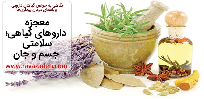 Photo of معجزه داروهای گیاهی؛ سلامتی جسم و جان
