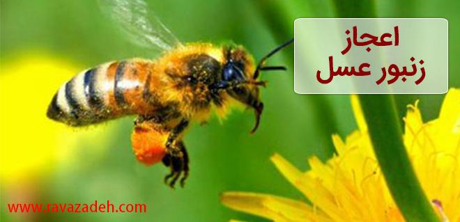 Photo of اعجاز زنبور عسل