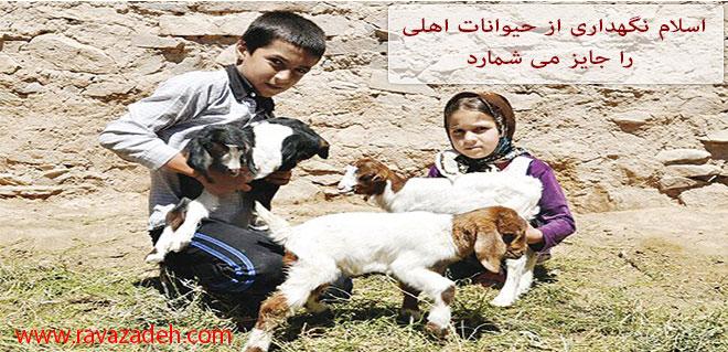 Photo of اسلام نگهداری از حیوانات اهلی را جایز می شمارد