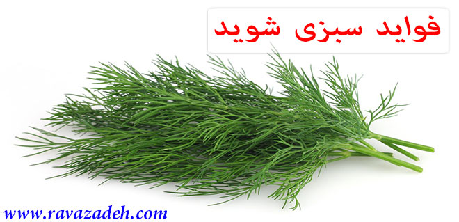 Photo of فواید سبزی شوید