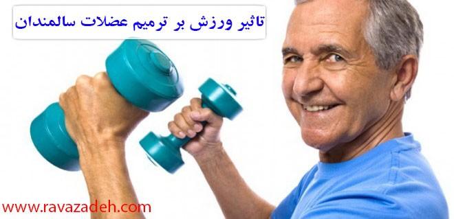تاثیر ورزش بر ترمیم عضلات سالمندان