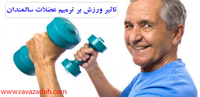 Photo of تاثیر ورزش بر ترمیم عضلات سالمندان