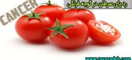 رد پای سرطان در گوجه فرنگی