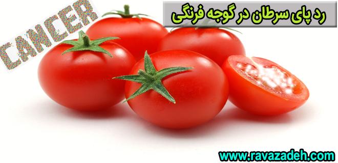 Photo of رد پای سرطان در گوجه فرنگی