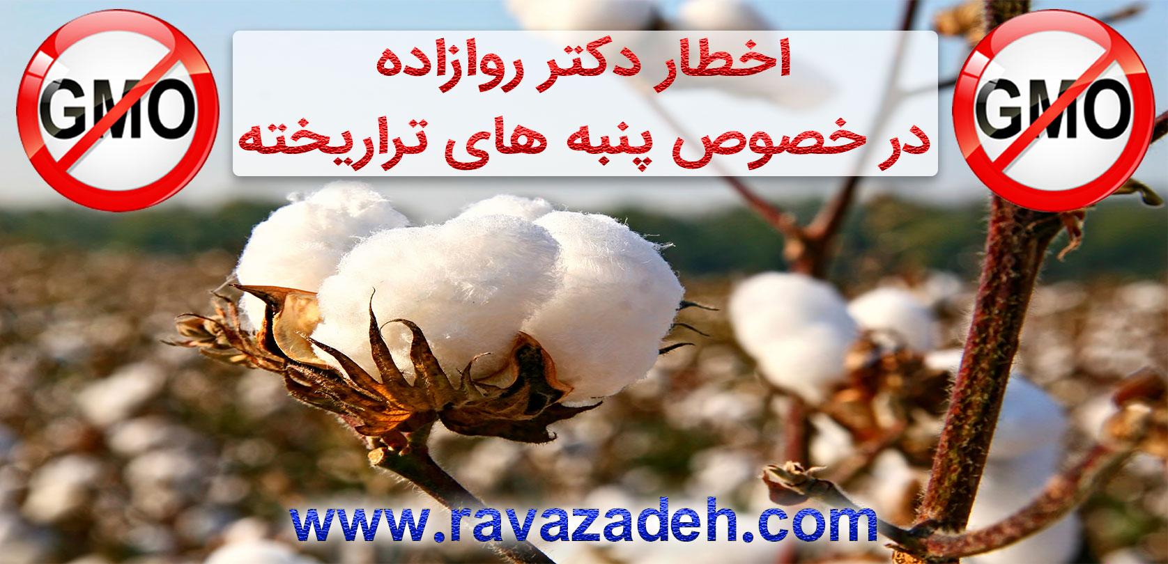 Photo of اخطار دکتر روازاده در خصوص پنبه های تراریخته