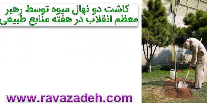 کاشت دو نهال میوه توسط رهبر معظم انقلاب در هفته منابع طبیعی+کلیپ تصویری