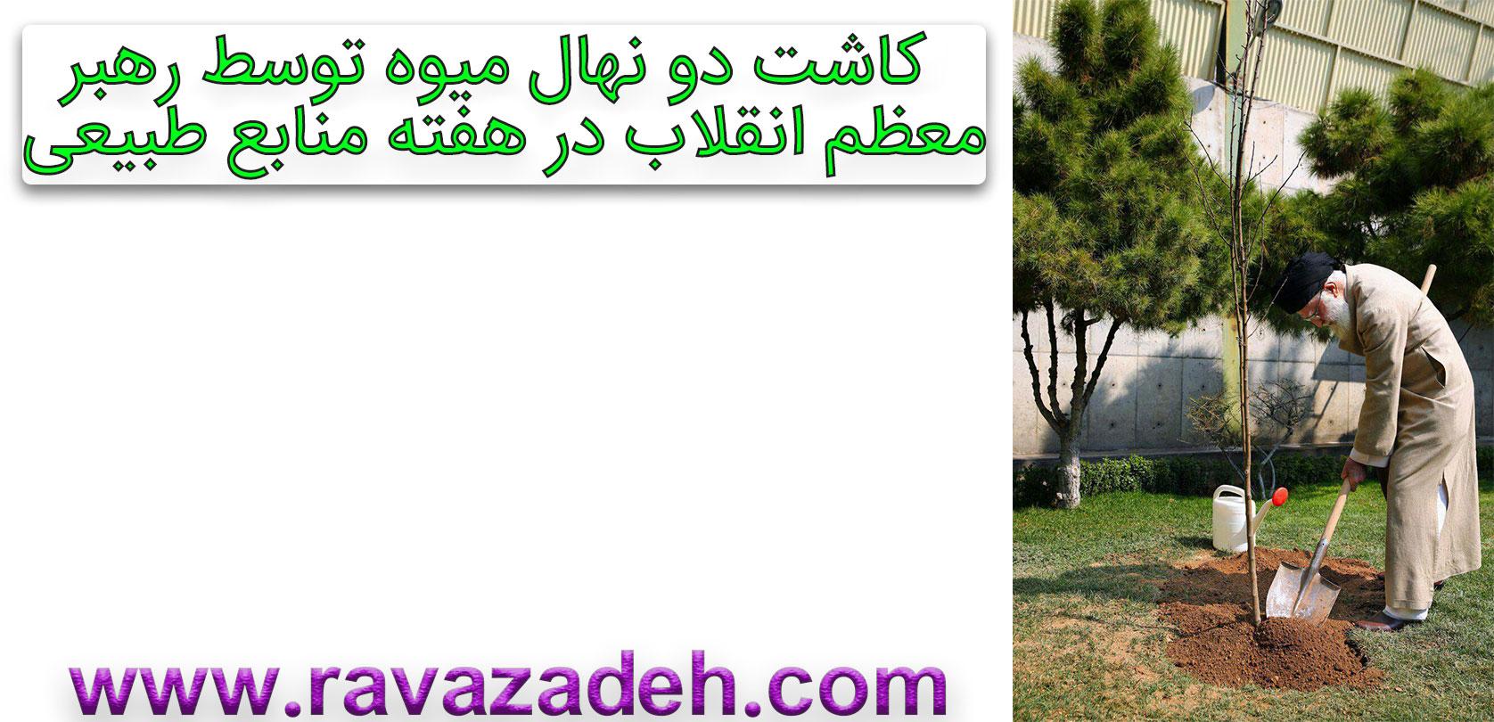 Photo of کاشت دو نهال میوه توسط رهبر معظم انقلاب در هفته منابع طبیعی+کلیپ تصویری
